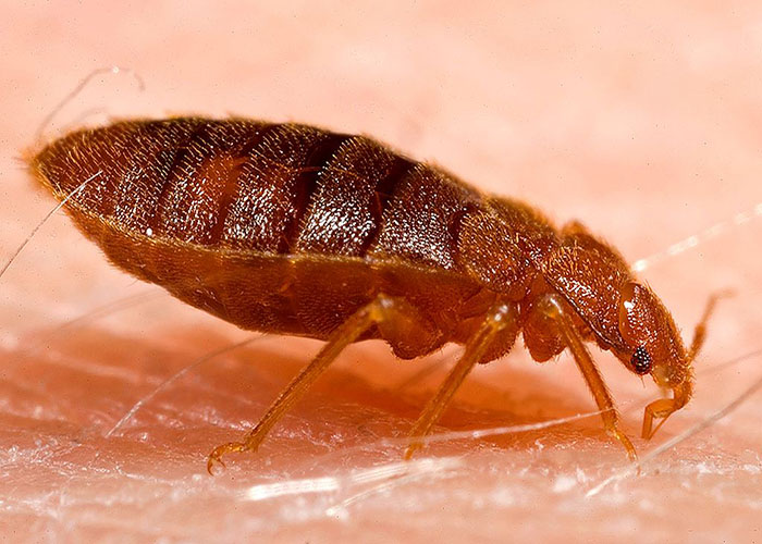 safe-your-home-with-bed-bugs