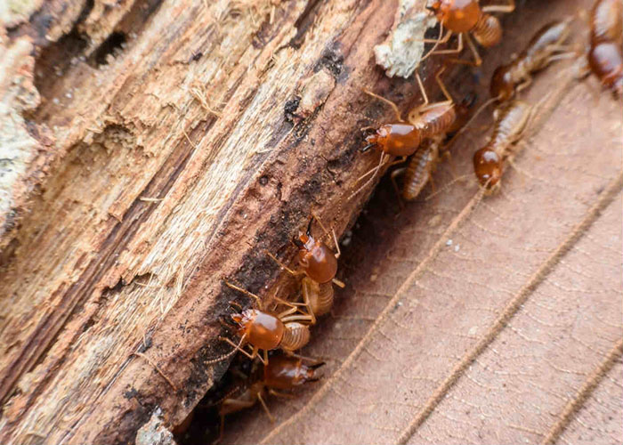Keep-Your-Home-Safe-From-Termites
